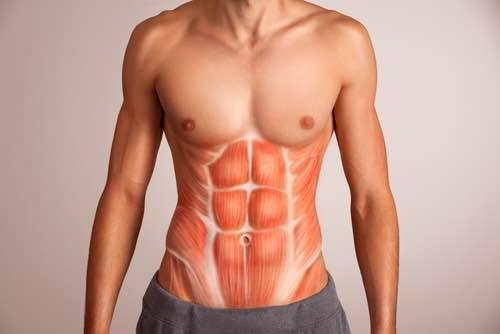 fitness ab anatomy